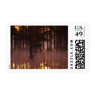N.A., USA, Georgia, George Smith State Park. Postage