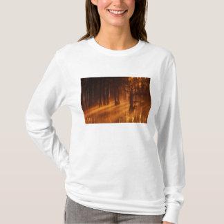 N.A., USA, Georgia, George Smith State Park. T-Shirt