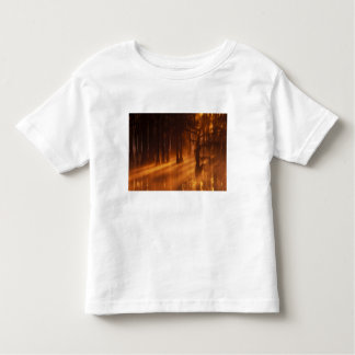 N.A., USA, Georgia, George Smith State Park. Toddler T-shirt