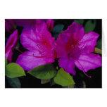 N.A. USA, Georgia, Savannah. Azalea in bloom. Card