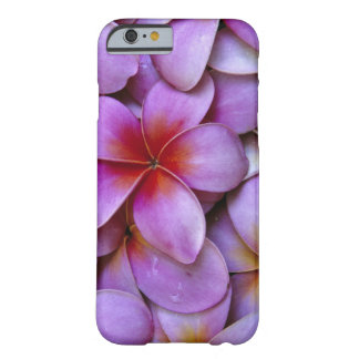 N.A., USA, Maui, Hawaii. Pink Plumeria blossoms. Barely There iPhone 6 Case