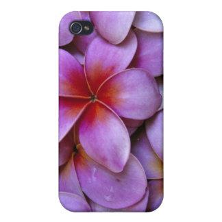 N.A., USA, Maui, Hawaii. Pink Plumeria blossoms. iPhone 4/4S Cover