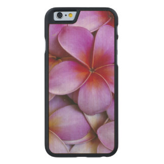 N.A., USA, Maui, Hawaii. Pink Plumeria blossoms. Carved® Maple iPhone 6 Case