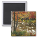 N.A., USA, New Hampshire, White Mountains, 2 Inch Square Magnet