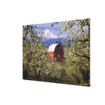N.A., USA, Oregon, Hood River County. Red Stretched Canvas Prints