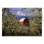 N.A., USA, Oregon, Hood River County. Red Card
