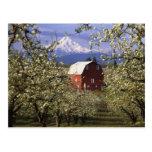 N.A., USA, Oregon, Hood River County. Red Postcard
