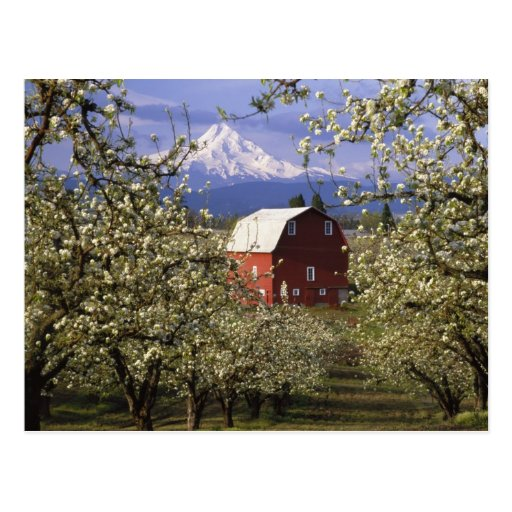 N.A., USA, Oregon, Hood River County. Red Postcards