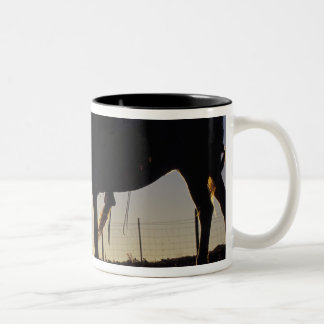 N A USA Oregon Seneca Ponderosa Ranch Coffee Mugs