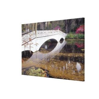 N.A., USA, South Carolina, Charleston.  Magnolia Stretched Canvas Prints