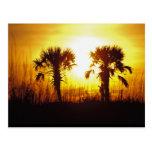 N.A., USA, South Carolina, Charleston. Sunset Postcard