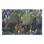 N.A., USA, Texas, Cactus surrounded by Art Photo