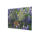 N.A., USA, Texas, Cactus surrounded by Canvas Print