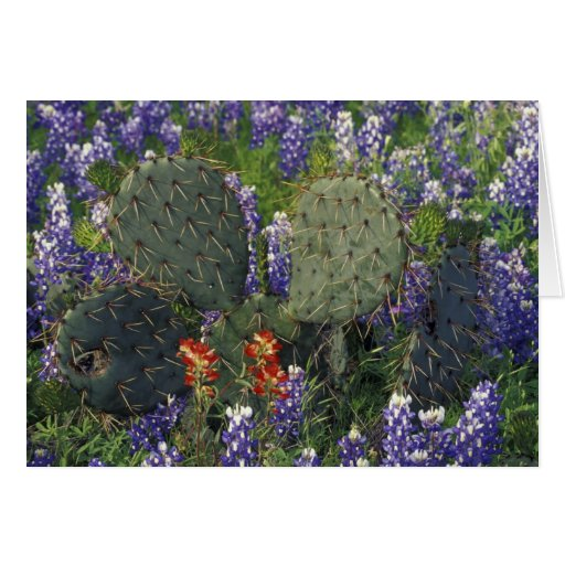 N.A., USA, Texas, Cactus surrounded by Greeting Card