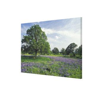 N.A, USA, Texas, Lake Buchanan, Oaks and Blue Canvas Print