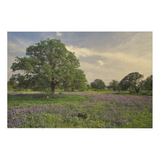 N.A, USA, Texas, Lake Buchanan, Oaks and Blue Wood Print