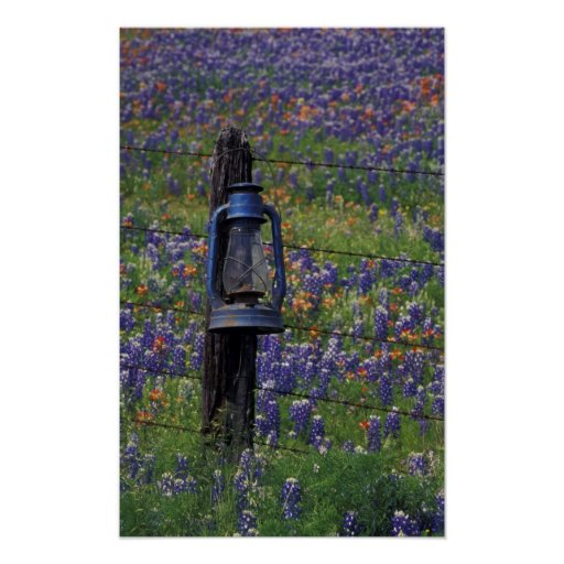 N.A., USA, Texas, Llano, Blue Lantern and Print