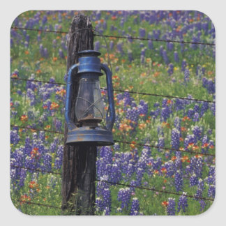 N.A., USA, Texas, Llano, Blue Lantern and Square Sticker
