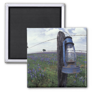 N.A., USA, Texas, Llano, Blue Lantern, Oak tree Magnet
