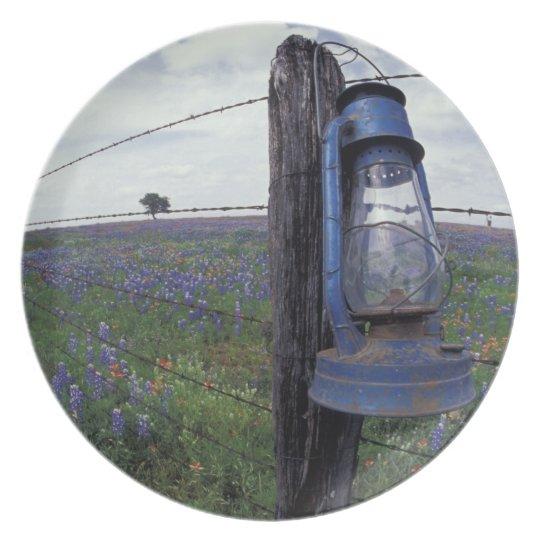 N.A., USA, Texas, Llano, Blue Lantern, Oak tree Melamine Plate