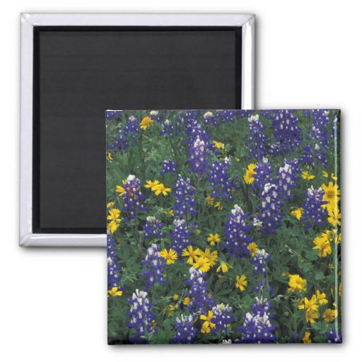 N.A, USA, Texas, Marble Falls, Blue Bonnets Magnets