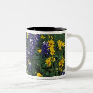 N.A, USA, Texas, Marble Falls, Blue Bonnets Two-Tone Coffee Mug