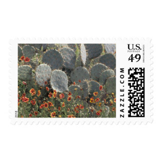 N.A., USA, Texas, Moore, Cactus and Indian Postage