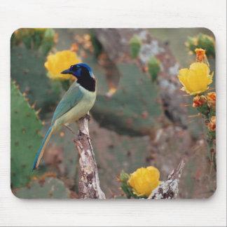 N.A., USA, Texas, South Texas Green Jay - Mouse Pad