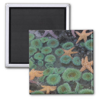 N.A., USA, Washington, Olympic National Park, 2 2 Inch Square Magnet