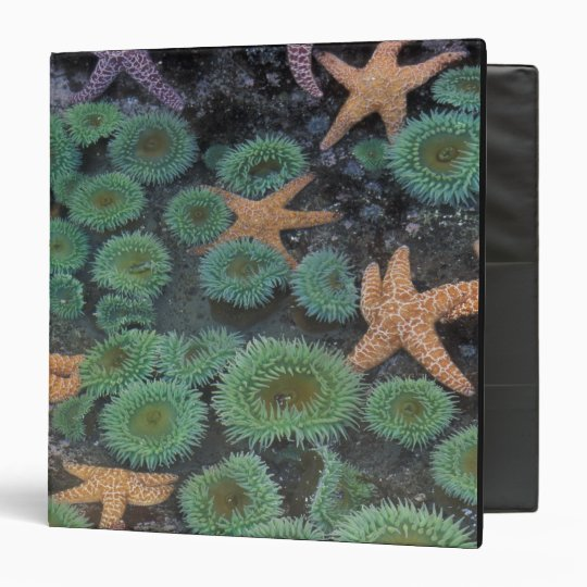 N.A., USA, Washington, Olympic National Park, 2 3 Ring Binder