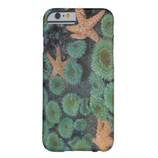 N.A., USA, Washington, Olympic National Park, 2 Barely There iPhone 6 Case