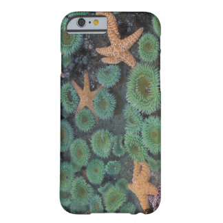 N.A., USA, Washington, Olympic National Park, 2 iPhone 6 Case