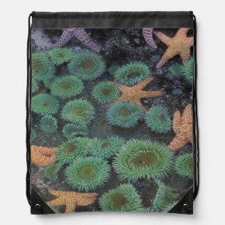 N.A., USA, Washington, Olympic National Park, 2 Drawstring Bag