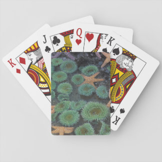 N.A., USA, Washington, Olympic National Park, 2 Playing Cards
