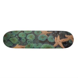 N.A., USA, Washington, Olympic National Park, 2 Skateboard