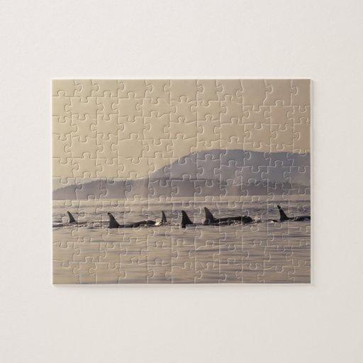 N.A., USA, Washington, San Juan Islands Orca Jigsaw Puzzle