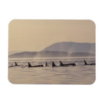 N.A., USA, Washington, San Juan Islands Orca Magnet