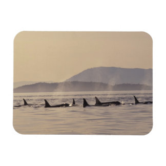 N.A., USA, Washington, San Juan Islands Orca Magnet