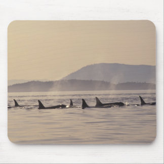 N.A., USA, Washington, San Juan Islands Orca Mouse Pad