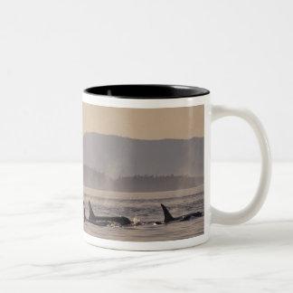 N.A., USA, Washington, San Juan Islands Orca Mugs