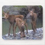N nacido aumentado en Talkeetna, Alaska Alfombrillas De Raton