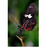 N roja Longwings negro Esculturas Fotográficas