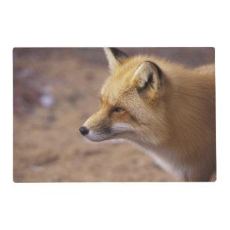 NA, Canadá. Fox rojo Tapete Individual
