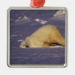 NA, Canadá, Manitoba, Churchill, oso polar Ornamente De Reyes