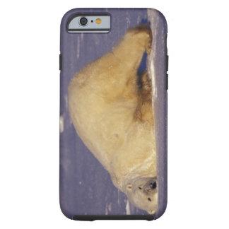 NA, Canadá, Manitoba, Churchill, oso polar Funda De iPhone 6 Tough