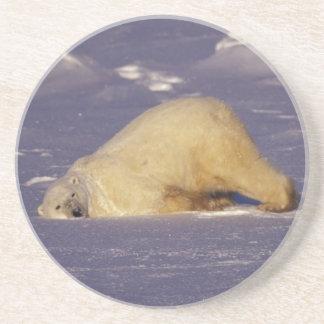 NA, Canadá, Manitoba, Churchill, oso polar Posavasos Diseño