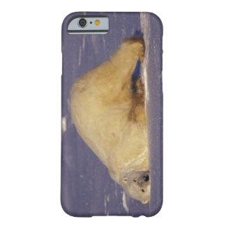 NA, Canada, Manitoba, Churchill, Polar bear Barely There iPhone 6 Case