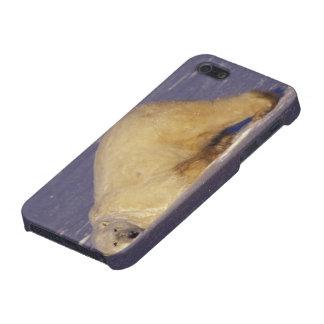 NA, Canada, Manitoba, Churchill, Polar bear Cover For iPhone SE/5/5s