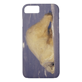 NA, Canada, Manitoba, Churchill, Polar bear iPhone 7 Case