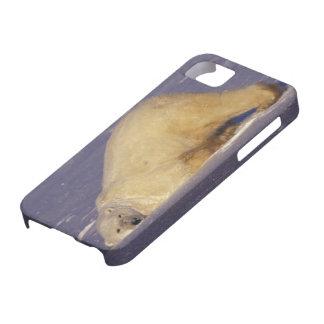 NA, Canada, Manitoba, Churchill, Polar bear iPhone SE/5/5s Case